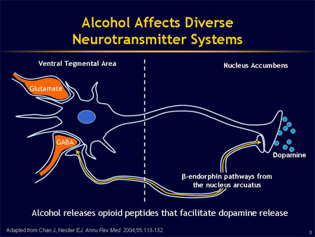 Alcohol and Neurotransmitters